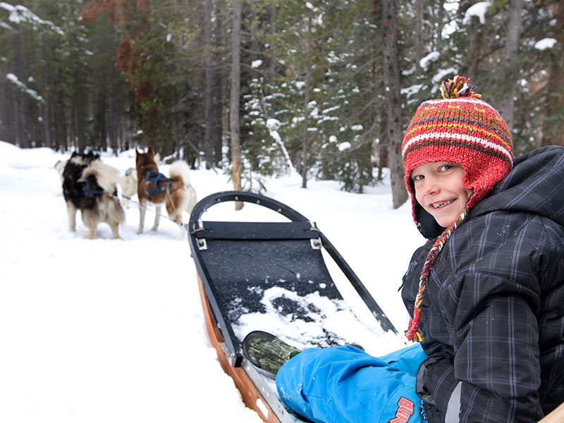 Dog sledding in Breckenridge